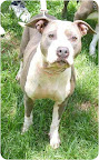 Kitty Palatka, Fla. See link to info. re: this pooch at end of post