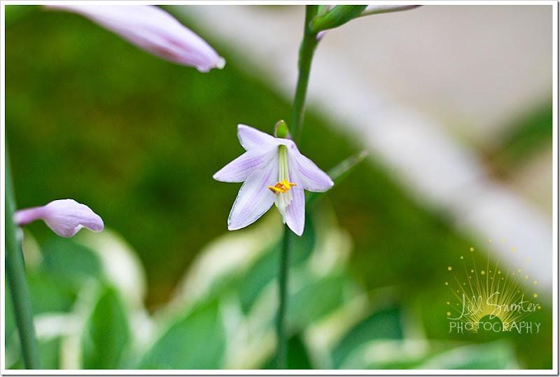 flowers-6019