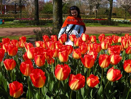 Amsterdam: tulips