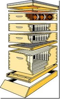 031513 diagram of Lang hive
