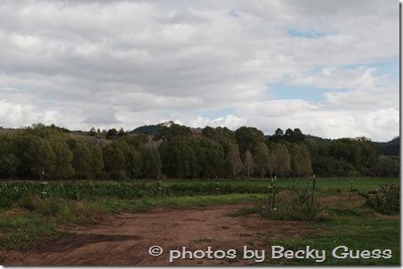10-05-11 raspberry farm near Mora NM 14