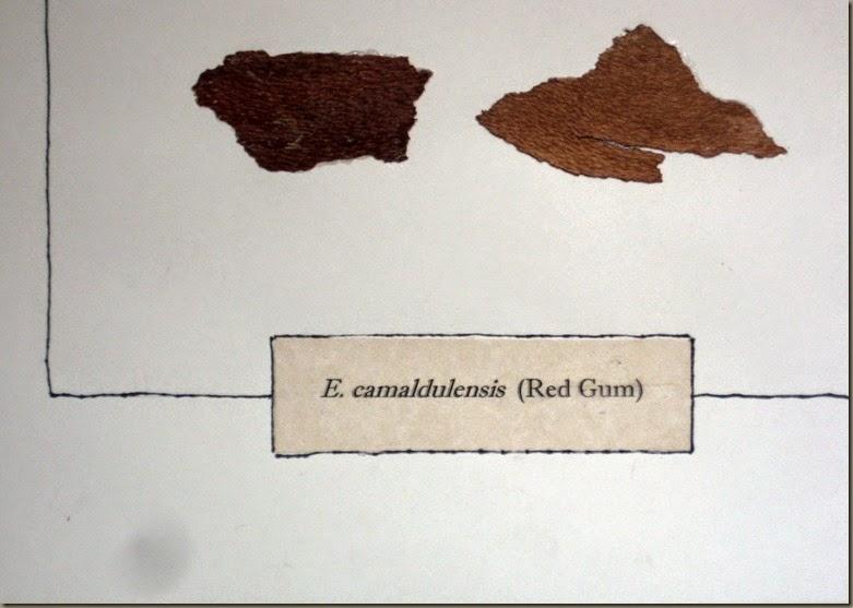 Red Gum Bark detail