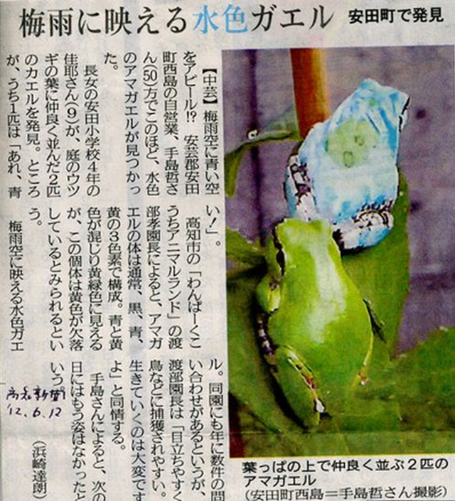 Mutated tree frog (above) from Aki-gun, Kochi Prefecture, near the Fukushima nuclear plant, compared with normal frog (below). Photo: blog.donga.com