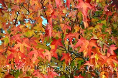 34 - Glória Ishizaka - Folhas de Outono