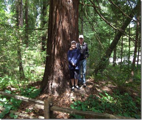 big trees 011