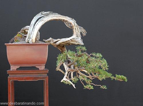 bonsais arvores em miniatura desbaratinando (21)