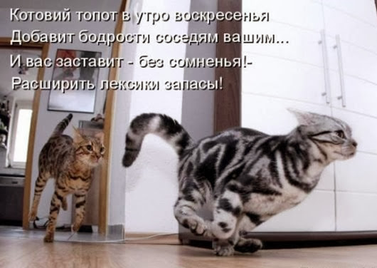 ba3f95008de26c8791df239359a_prev