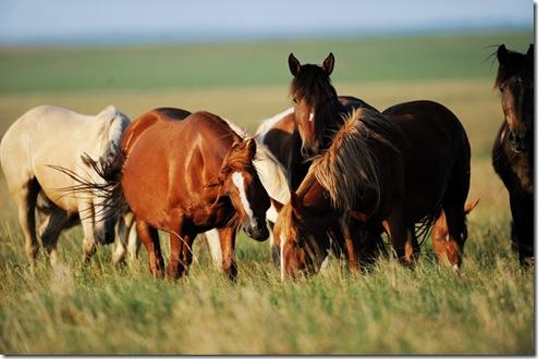 wild horses pioneer woman