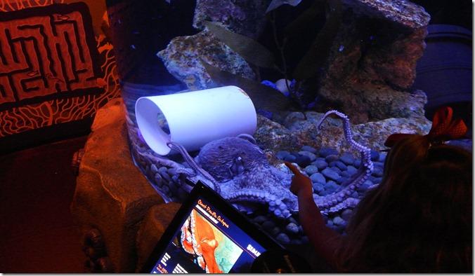 Sea Life Aquarium 091