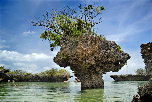 Coral and Mangrove, Zanzibar, Tanzania, East Africa