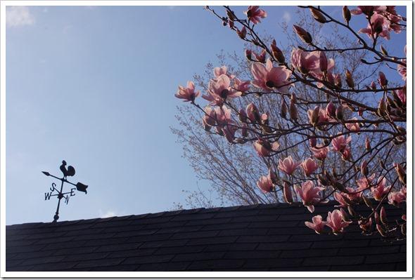 magnolia weathervane