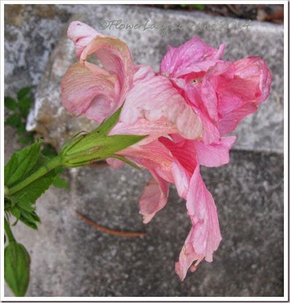 05-14-pink-hib2