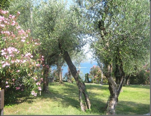 Olivenlund (2)