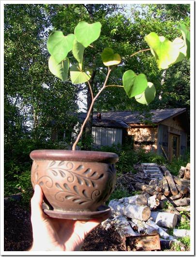 bonsai hand