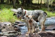 Dogs Trekking 6 (22_1) (6)