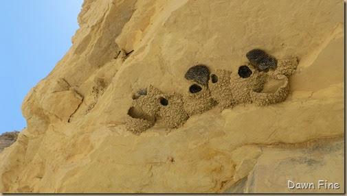 Terlingua rockhounding_118