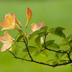 angkorsite_flower_1 (113).jpg
