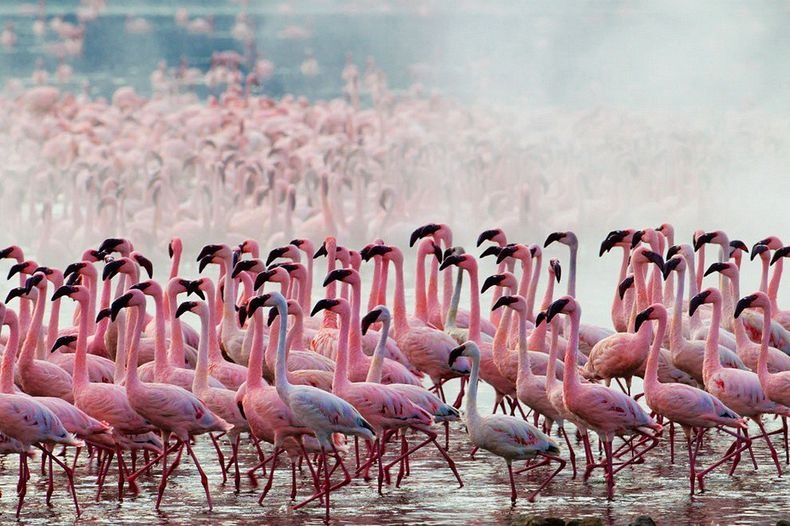 lake-nakuru-flamingos-3