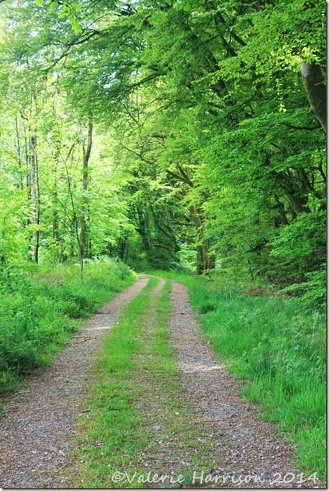 10-leafy-lane