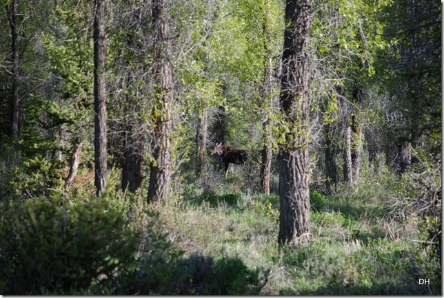 06-03-13 B Grand Teton National Park (63)