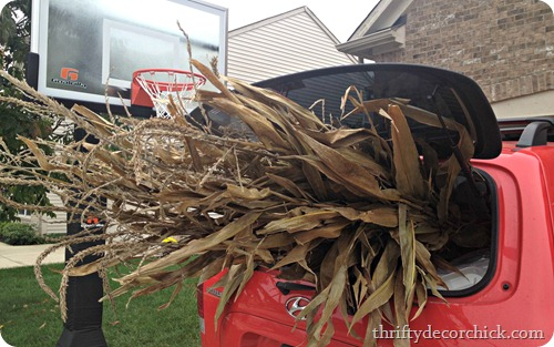 corn stalks for fall