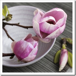 catherine-beyler-magnolia-on-a-bowl