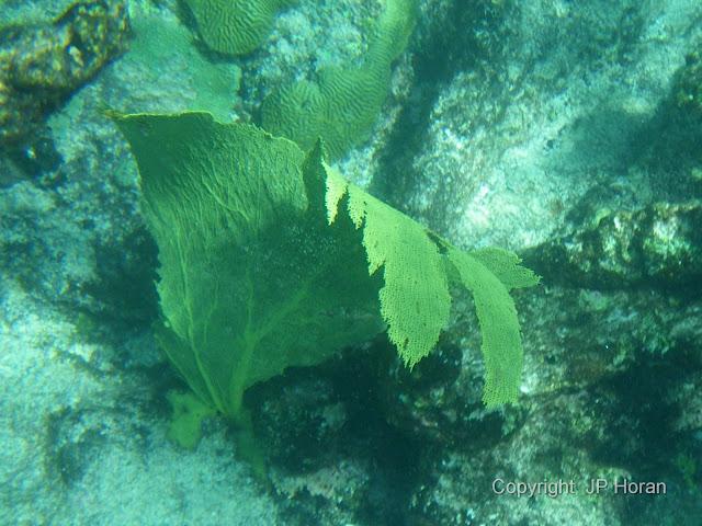 Buck Island Reef - IMGP2344.jpg