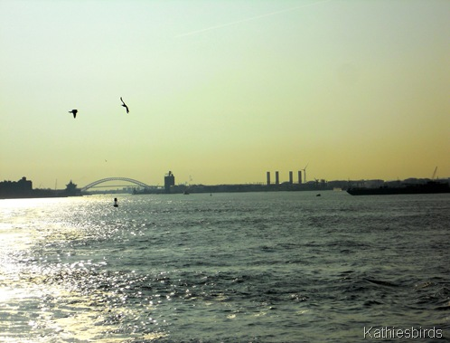 17. New York harbor-kab