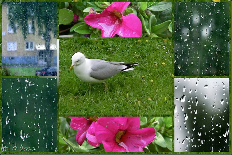 2011-05-27 rain1
