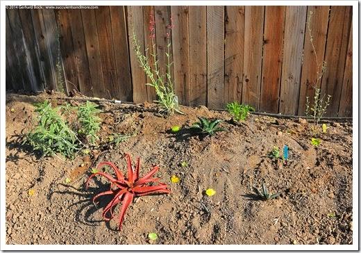 140316_desert_garden_planting3