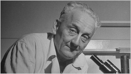 Albert Szent-Gyorgyi 118th birthday celebration Google Doodle 2011
