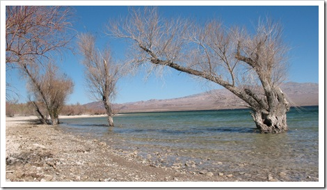 2012-02-24 Lake Mohave Tree Scene