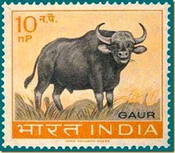 Gaur stamp