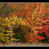 Fall Color / Hiawatha National Forest / Upper MI.
