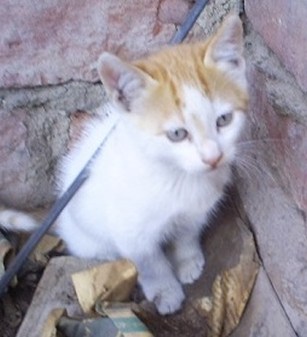 Noviembre en busca de hogar alco adopciones - Gatitos de un mes ...