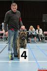 20130511-BMCN-Bullmastiff-Championship-Clubmatch-2350.jpg