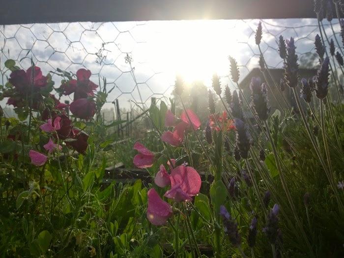 my garden oct 2014 (7)