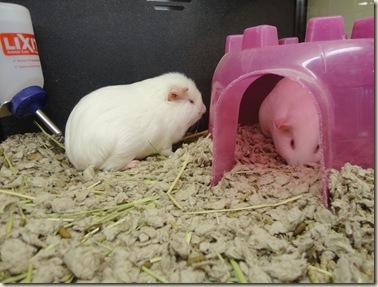 Pet Store 012A