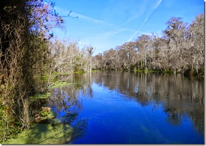 silver_springs_swamp_trail_scenery