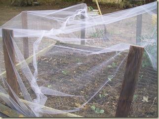 canton- coop progress- netting-around the yard 042