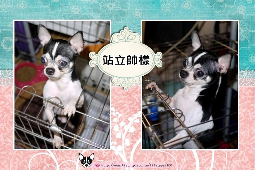 201007minibook-dog02.jpg