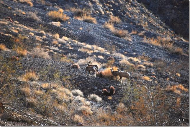 11-08-13 A DV 4x4 Titus Canyon Road (358)a