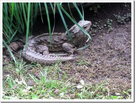 Henry the Tuatara at Invergargill's Museum and I Site.