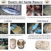 quilezBonito del Norte Rosara.jpg