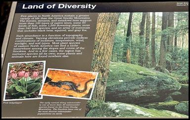 11d - Newfound Gap Stop - Land of Diversity