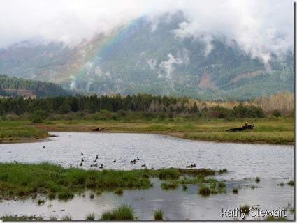 Rainbow, ducks and eagle