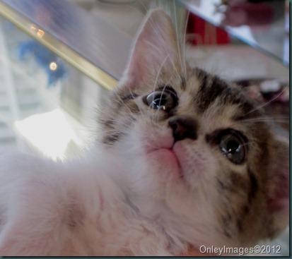 Rocky the kitten