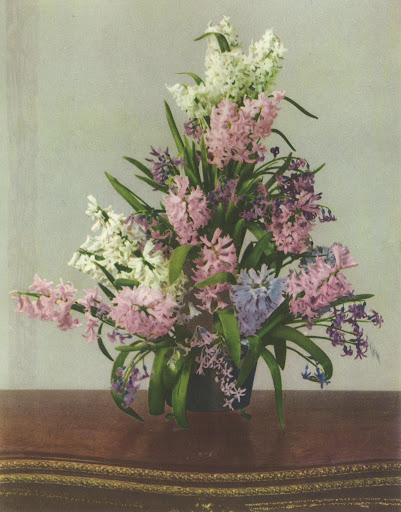 This beautiful selection of Dutch hyacinths is showcased in a three-tiered vase. There is an unmistakably dreamy quality thanks to the refreshing Cynthella hyacinths.