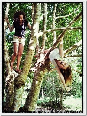 19 in the mango tree