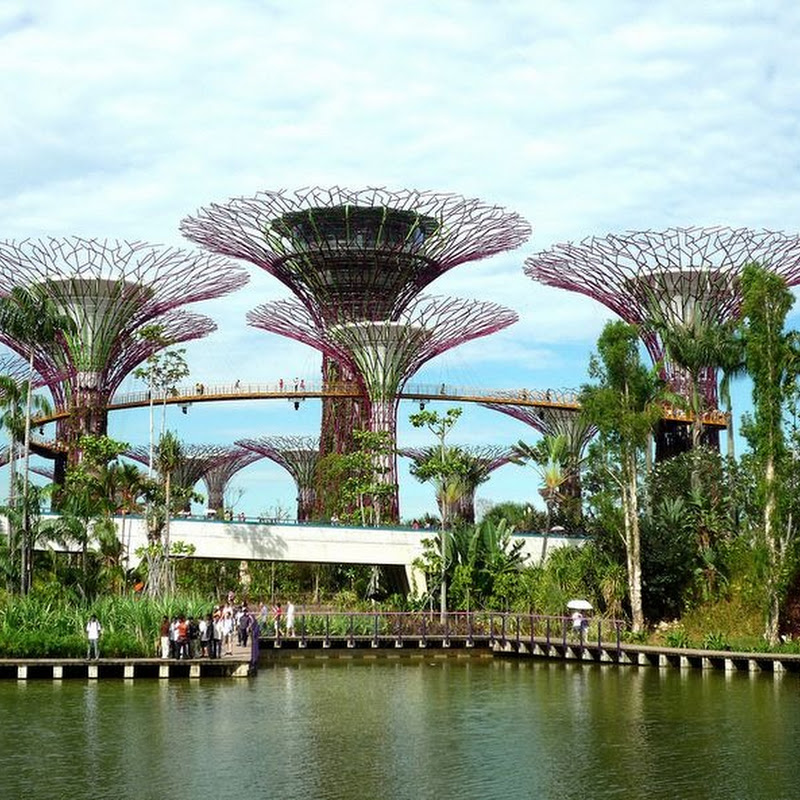 Supertree Grove at Gardens by the Bay, Singapore